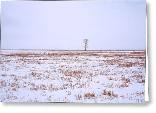 Snow Scene Landscape Greeting Cards - Snow Covered Landscape In Winter Greeting Card by Panoramic Images