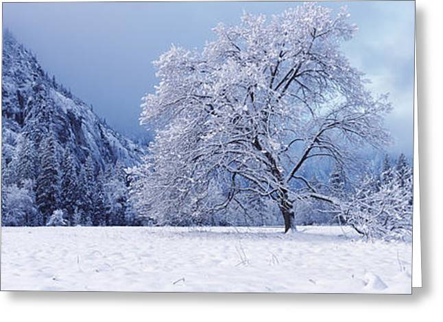 Snow Scene Landscape Greeting Cards - Snow Covered Oak Tree In A Valley Greeting Card by Panoramic Images