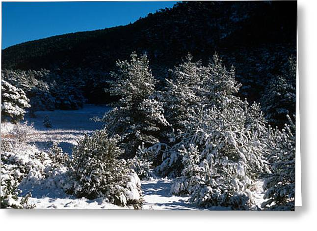 Snow Covered Pine And Fir Trees Greeting Card by Panoramic Images