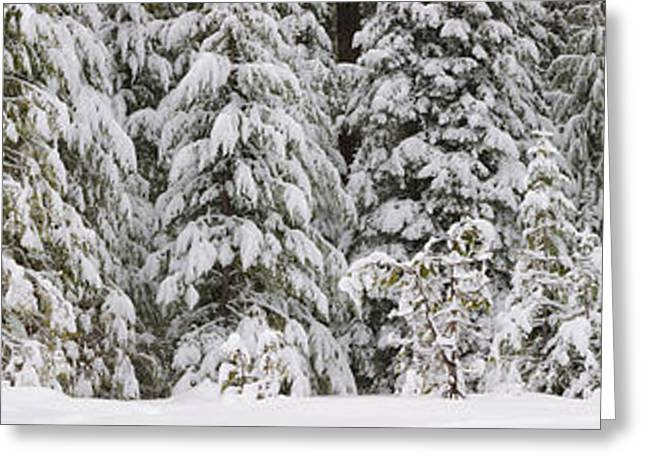 Deschutes Greeting Cards - Snow Covered Pine Trees, Deschutes Greeting Card by Panoramic Images
