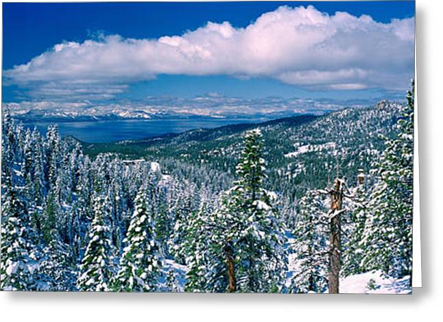 Snow Covered Pine Trees In A Forest Greeting Card by Panoramic Images