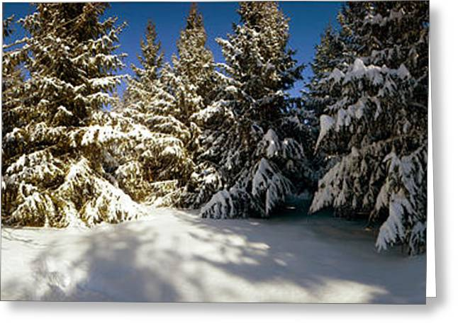 Quebec Scenes Greeting Cards - Snow Covered Pine Trees, Quebec, Canada Greeting Card by Panoramic Images