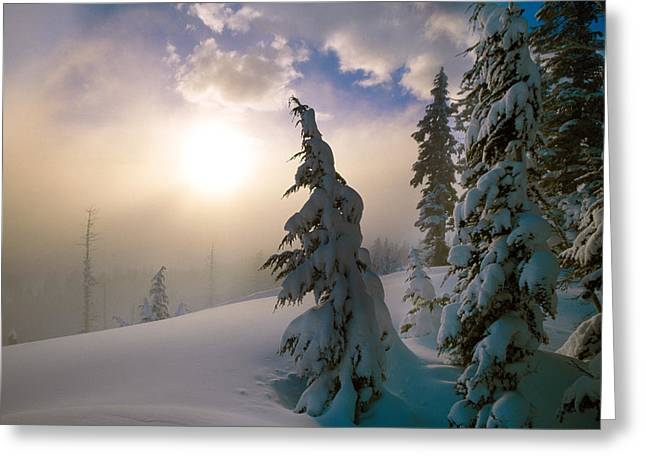 Misty Pine Photography Greeting Cards - Snow-covered Pine Trees, Sunrise Greeting Card by Panoramic Images