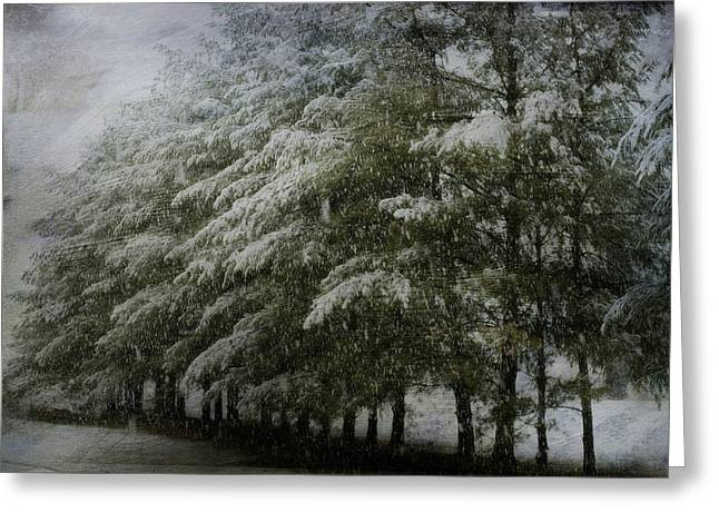Snow Tree Prints Greeting Cards - Snow Covered Pines Greeting Card by Kathy Jennings