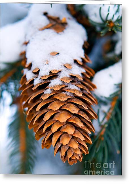 Spruce Cone Greeting Cards - Snow Covered Spruce Cone Greeting Card by Terry Elniski