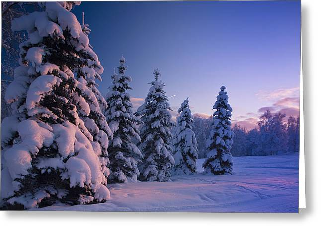 Wintry Greeting Cards - Snow Covered Spruce Trees At Sunset Greeting Card by Kevin Smith