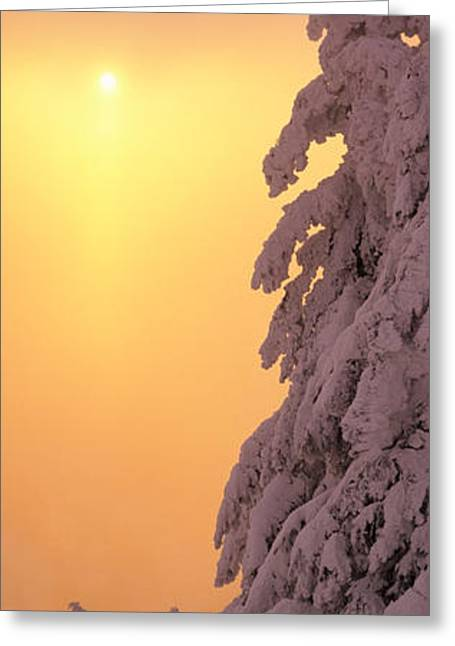 Snow Covered Tree In Winter At Sunset Greeting Card by Panoramic Images