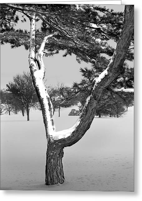 Snow Tree Prints Greeting Cards - Snow Covered Tree in Winter Greeting Card by Randall Nyhof