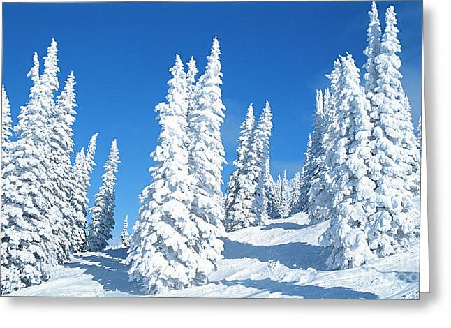 Trees In Snow Greeting Cards - Snow Covered Trees Colorado Greeting Card by Jim Steinberg