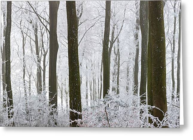 Bare Trees Greeting Cards - Snow Covered Trees In A Forest, Wotton Greeting Card by Panoramic Images