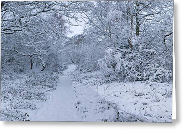 Hampstead Greeting Cards - Snow Covered Trees In A Park, Hampstead Greeting Card by Panoramic Images