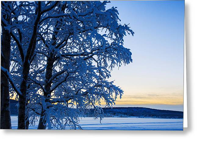 Temperature Greeting Cards - Snow Covered Trees In Extreme Cold Greeting Card by Panoramic Images