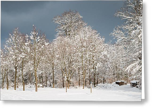 Winterly Forest Greeting Cards - Snow covered trees in the forest in winter Greeting Card by Matthias Hauser