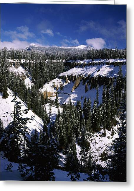 Crater Lake National Park Greeting Cards - Snow Covered Trees In Winter, Godfrey Greeting Card by Panoramic Images