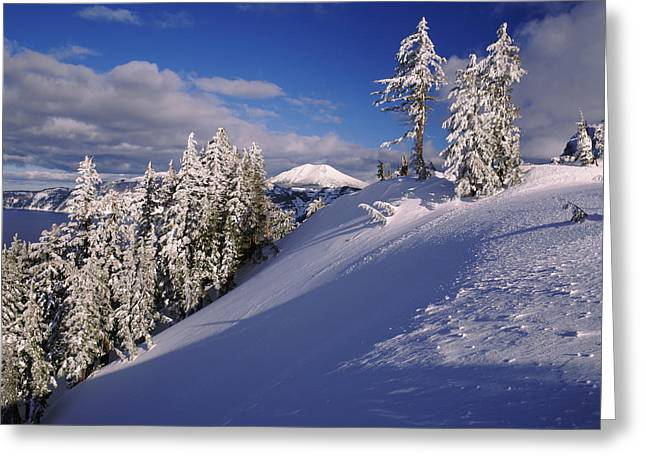 Crater Lake National Park Greeting Cards - Snow Covered Trees In Winter, Mt Greeting Card by Panoramic Images