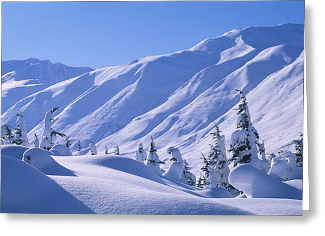 Alaska Scene Greeting Cards - Snow Covered Trees On A Hill, Chugach Greeting Card by Panoramic Images