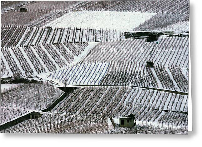 World Destination Photographs Greeting Cards - Snow-covered Vineyards in Switzerland Greeting Card by Adam Sylvester