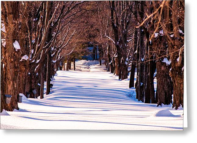 Lee Costa Greeting Cards - Snow covered way Greeting Card by Lee Costa