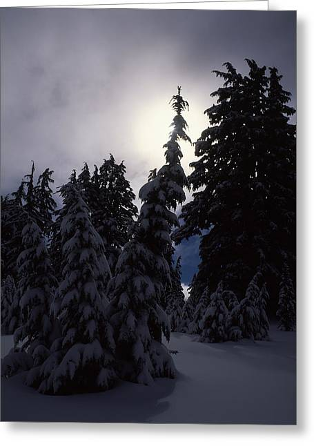 Overcast Day Greeting Cards - Snow Covered Western Hemlock And Fir Greeting Card by Panoramic Images