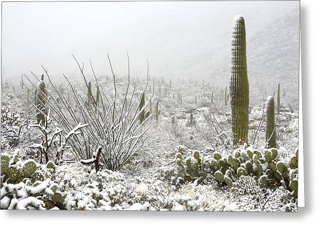 Rincon Greeting Cards - Snow Day in the Desert  Greeting Card by Saija  Lehtonen