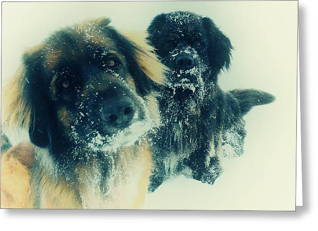 Dog In Snow Greeting Cards - Snow Day Greeting Card by Mountain Dreams