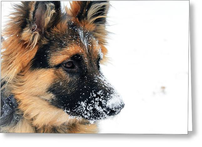 Dogs In Snow. Greeting Cards - Snow Days Greeting Card by Lauren Blazer