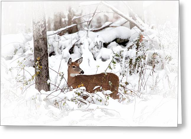 Snow Doe Greeting Card by Karol Livote