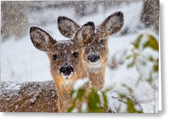 Snow Does Greeting Card by Betsy Knapp