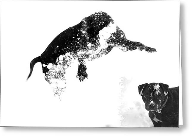 Experiment Greeting Cards - Snow Dog 2 Greeting Card by Crystal Harman