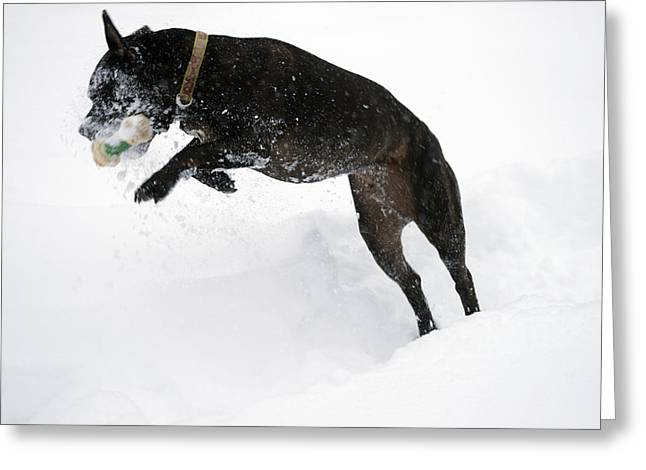 Experiment Greeting Cards - Snow Dog 3 Greeting Card by Crystal Harman