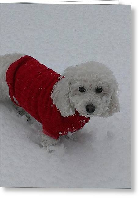 Dog Sweaters Greeting Cards - Snow Dog Greeting Card by Heather Ashley