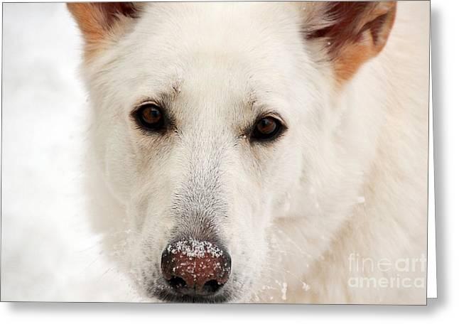 Jill Hyland Greeting Cards - Snow Dog Greeting Card by Jill Hyland