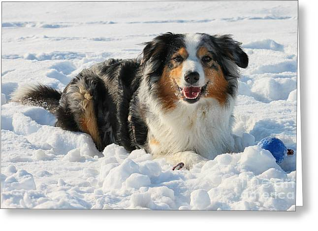 Winter Photos Greeting Cards - Snow Dog Greeting Card by Jutta Maria Pusl