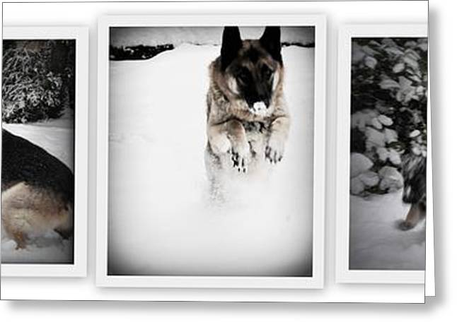 Searcy Greeting Cards - Snow Dogs. Triptich Greeting Card by Tanya  Searcy