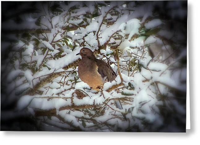 Birds In Winters Greeting Cards - Snow Dove Greeting Card by Karen Wiles