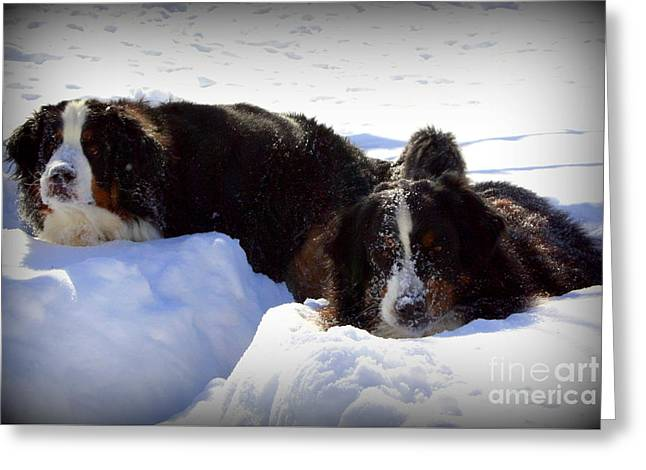 Dogs In Snow. Greeting Cards - Snow Eaters Greeting Card by Patti Whitten