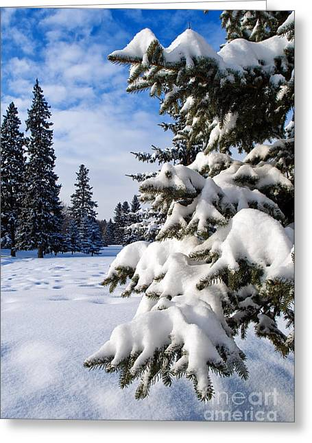 Winter Time Greeting Cards - Snow Fall Greeting Card by Terry Elniski