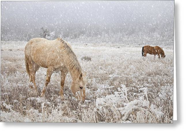 Grazing Snow Greeting Cards - Snow Falling On Horses Greeting Card by Theresa Tahara