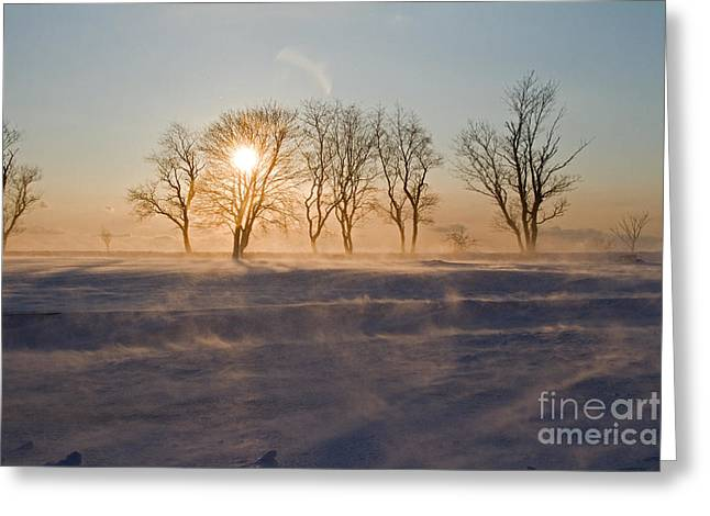 Drifting Snow Greeting Cards - Snow Fields Greeting Card by Butch Lombardi
