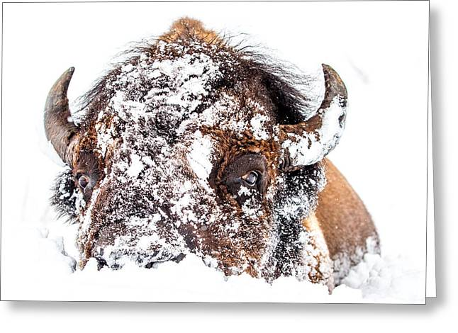 White Thick Fur Greeting Cards - Snow fight Greeting Card by Thomas Szajner
