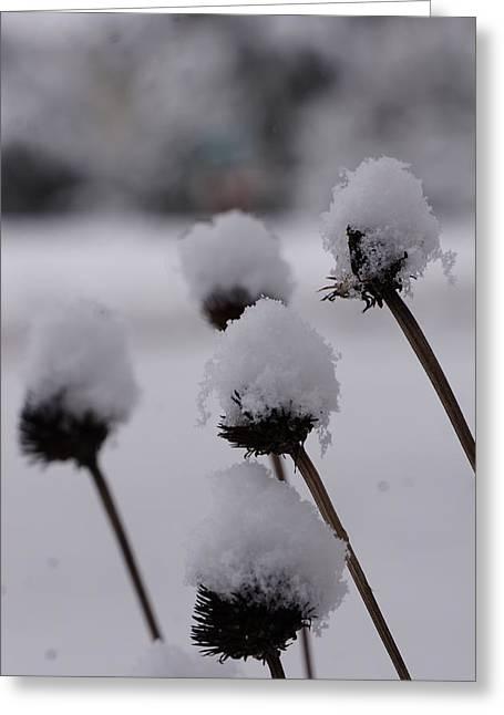 Brian Jones Greeting Cards - Snow Flowers Greeting Card by Brian Jones