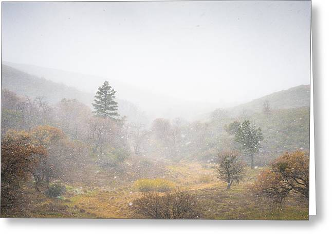 Flurries Greeting Cards - Snow Flurry Greeting Card by Alexander Kunz