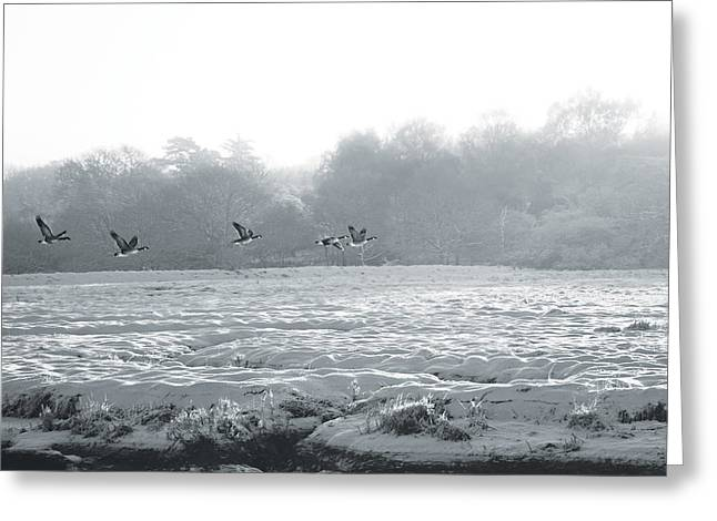 Snow Drifts Digital Art Greeting Cards - Snow and Geese Greeting Card by David Davies