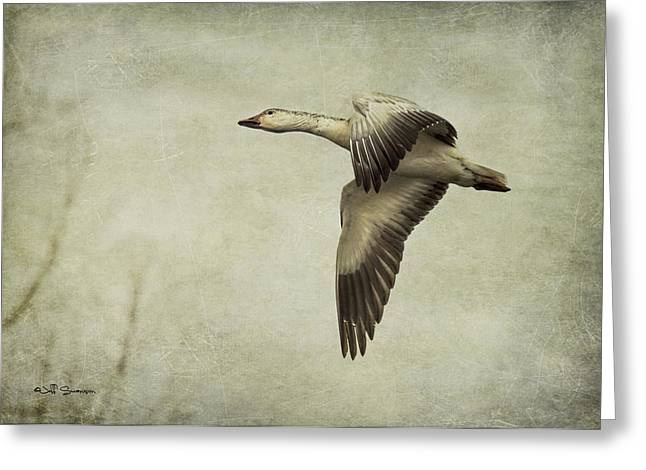 Water Fowl Greeting Cards - Snow Goose in Flight Greeting Card by Jeff Swanson