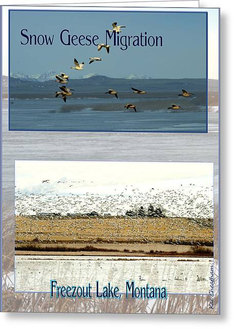 Flocks Of Birds Mixed Media Greeting Cards - Snow Goose Poster Greeting Card by Kae Cheatham