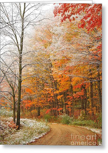Fall Trees Greeting Cards - Snow in Autumn 14 Greeting Card by Terri Gostola