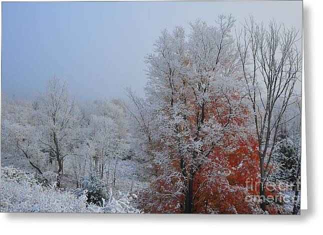 Autumn Trees Greeting Cards - Snow in Autumn 28 Greeting Card by Terri Gostola