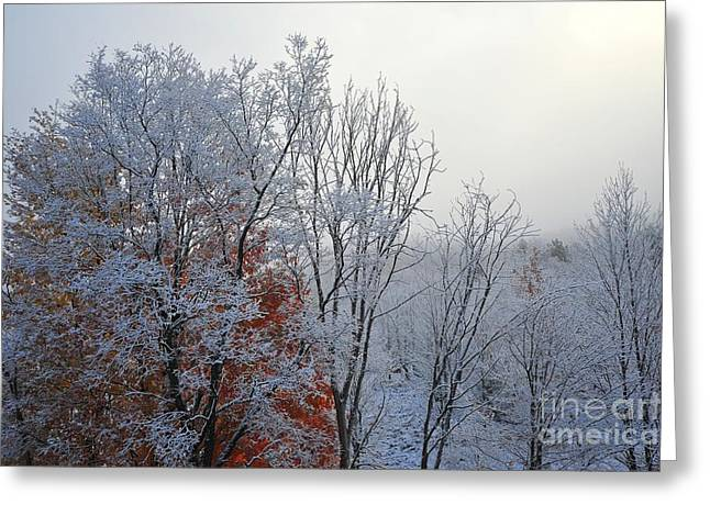 Fall Leaves Greeting Cards - Snow in Autumn 30 Greeting Card by Terri Gostola