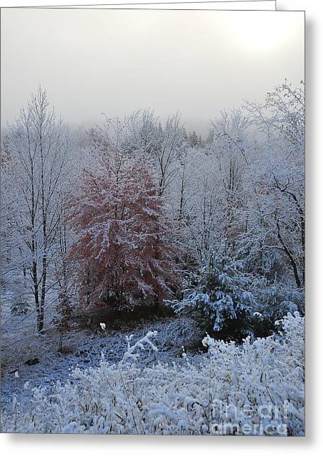 Fall Trees Greeting Cards - Snow in Autumn 31 Greeting Card by Terri Gostola