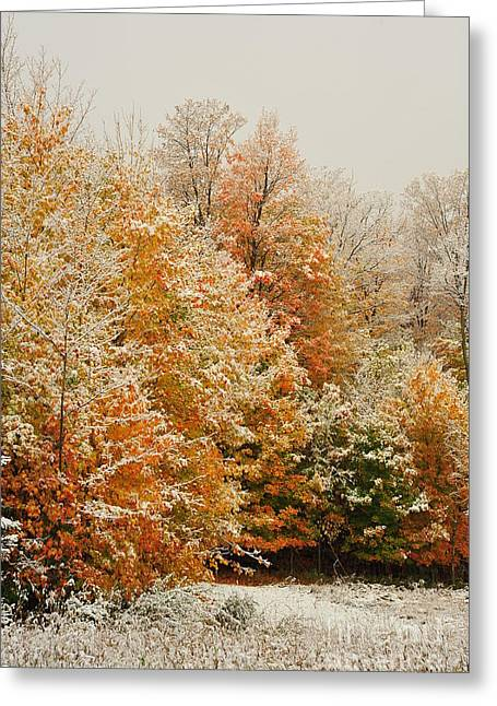 Trees Greeting Cards - Snow in Autumn 45 Greeting Card by Terri Gostola